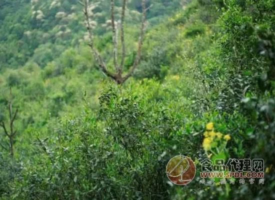 茶人岭图片