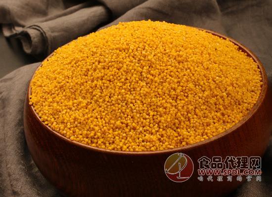 鵲好沁州黃小米