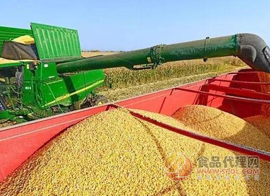 关于印发苏州市超标粮食处置实施细则的通知