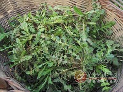 """""""蔬菜抢早才更有卖价,广东海南的气温高,适合野菜生长,长得快而且质量"""