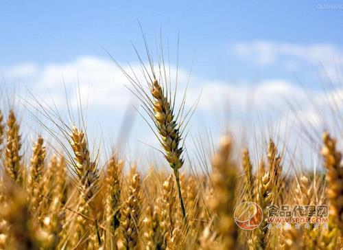 俄罗斯粮食出口结构中小麦比重占56%