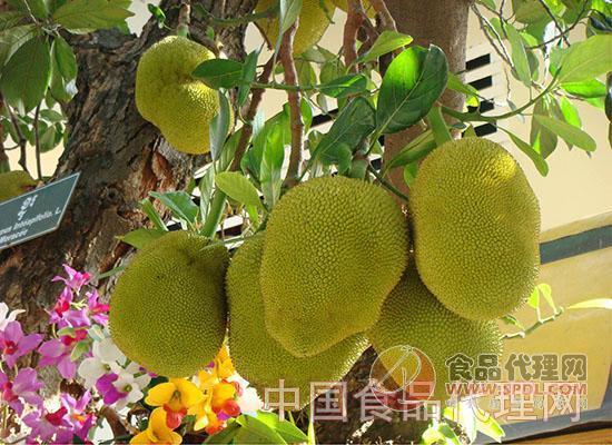 吃菠萝蜜有什么好处图片