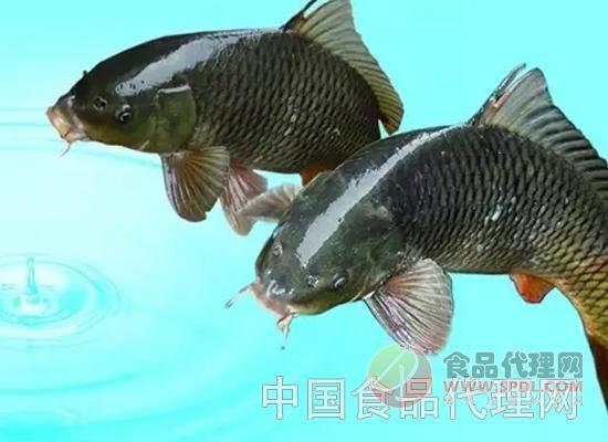 你的鲜活淡水鱼的消费提示已经到达