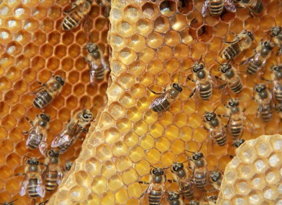 蜂蜜种类很多,那么土蜂蜜的功效有哪些?