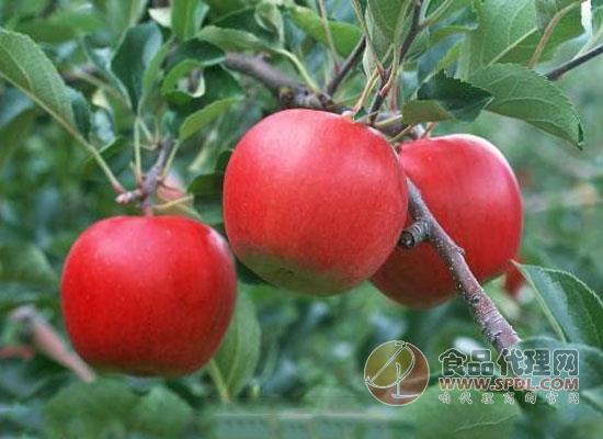 低糖水果有哪些?推荐三种美容瘦身的低糖水果
