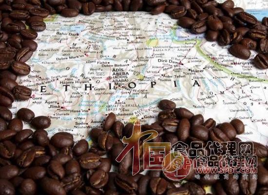 野生咖啡豆