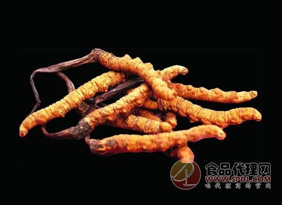 冬虫夏草怎么吃?这样食用才能吃出健康吃出美味