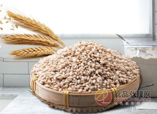 品味藏族文化,青稞米多少钱一斤?