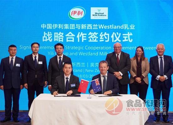 伊利全球板块又扩大,收购Westland公司获取新西兰奶源!
