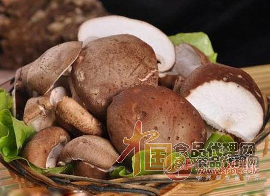 花菇和香菇的区别
