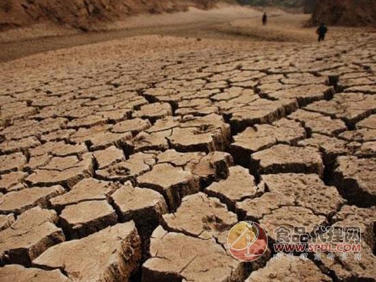 印度马哈拉施特拉邦旱灾加剧,820万农民望地兴叹