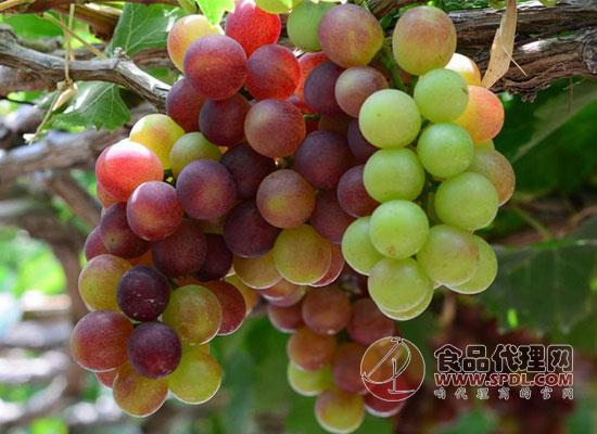 如何分辨葡萄是否被打激素,打激素的葡萄还能吃吗