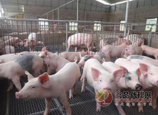养猪业务虽小有亏损,但温氏股份上半年仍净赚13.8亿