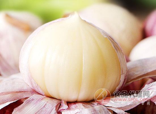 山里哆紫皮独头蒜价格是多少,好蒜好味道