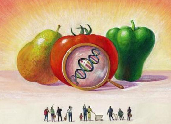 是天使还是魔鬼,专家带你解读转基因食品