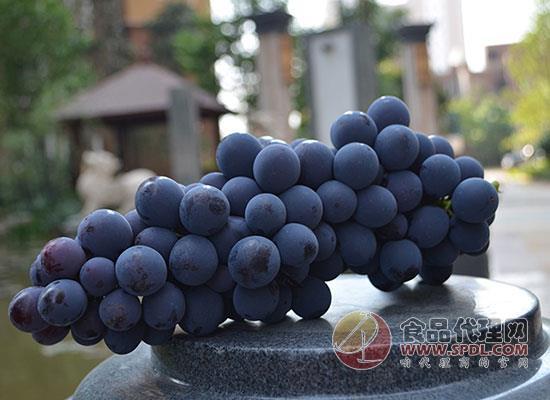 云南夏黑葡萄好吃嗎,酸甜可口味道飄香