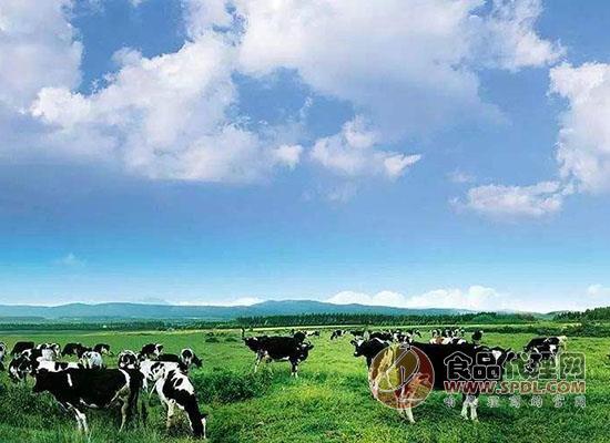 參觀完達山松北牧場,一起見證奶牛愉悅生活