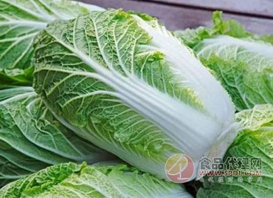 大白菜放置時間長到底能不能吃,看完之后真相自知