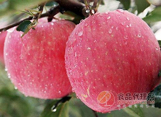 苹果与什么食物一起吃较好,吃苹果有哪些注意事项