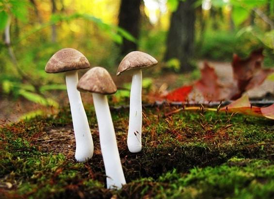 蘑菇竟能減糖,蘑菇化身減苦劑上演另類減糖