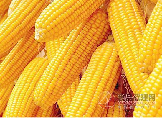 玉米种植在什么区域,这六大种植区你知道吗