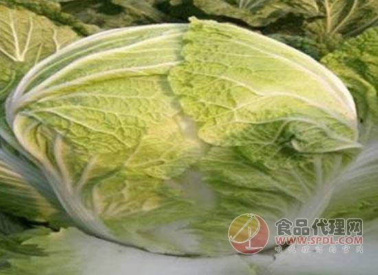 如何分辨白菜的好坏,白菜怎么做好吃