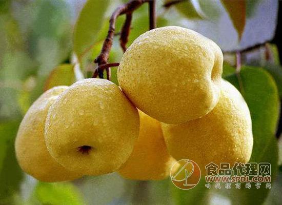 梨怎么吃好呢,吃梨的不宜人群