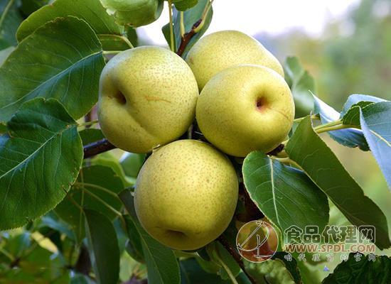 什么時候吃梨好呢,梨生吃和熟吃的區別