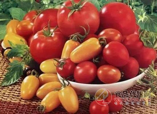 吃西红柿为什么能减肥,本文告诉你原因