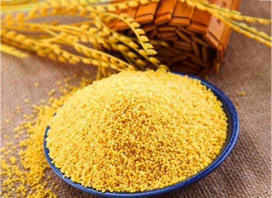 黃小米越貴越好嗎,答案可能與你想的不一樣