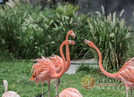 上海動物園景點介紹