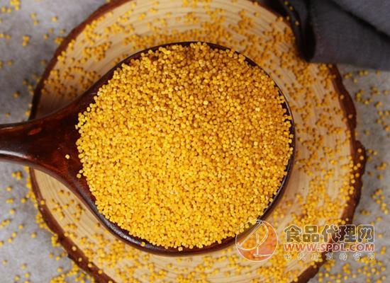 鹊好沁州黄小米价格是多少,轻松熬出厚厚的米油