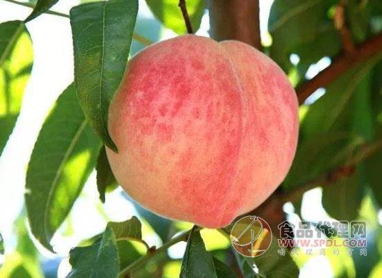 桃子放冰箱冷藏可以保存多久