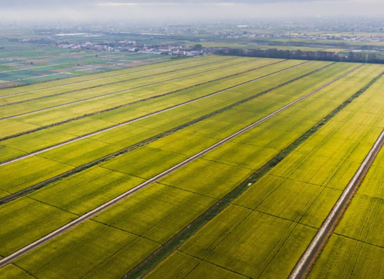 云南省關于配合做好糧食產品質量安全專項監測工作的通知