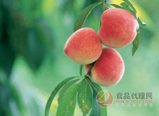 桃子可以存放多久不會壞,視桃子成熟度來決定