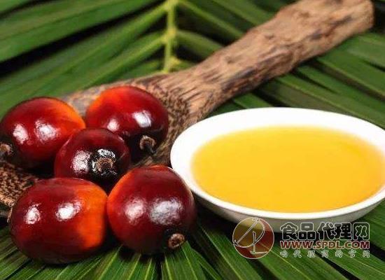 橄欖油和棕櫚油的區別,從這三個方面可以看出