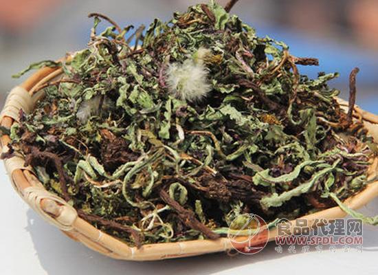 蒲公英茶的作用,喝它需要注意什么