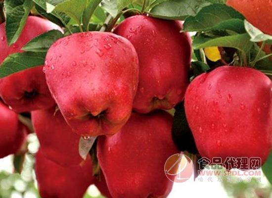 天地壹号苹果醋减肥吗,喝它有什么好处
