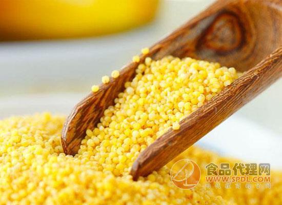 黑小米和黄小米的区别,吃黄小米需要注意什么