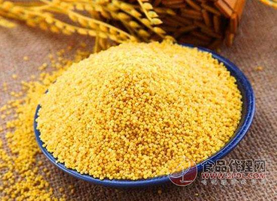 黄小米酒的做法,大黄米与黄小米的区别