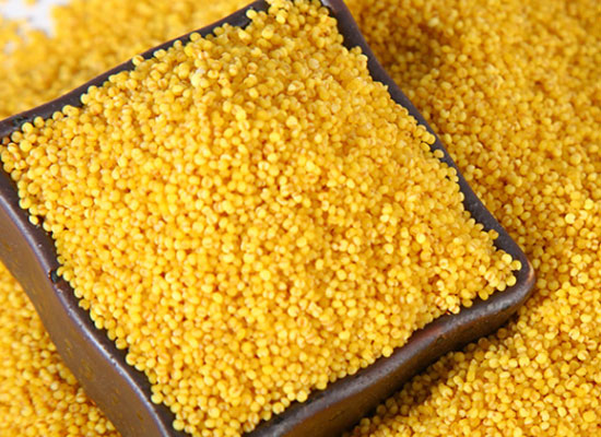 硃碌科哈黄小米,健康油脂的黄小米