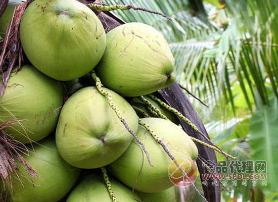拉肚子可以喝椰子汁吗,饮用椰子汁时需要注意什么