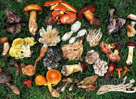 遵義市食品委員會辦公室特發布預防食用野生菌中毒公告