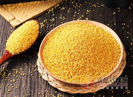 """菲律宾或许将成全球初个商业化生产转基因""""黄金大米""""的国家"""