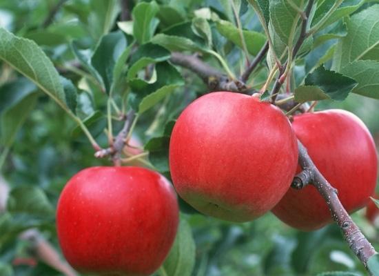 乳果爱食品竭力满足消费需求 打造绿色健康食品