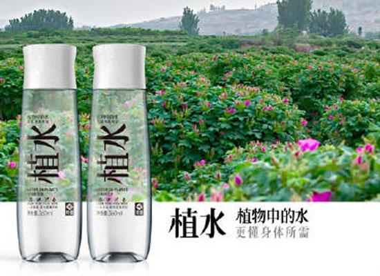 芳蕾植水,你身边的天然植物水