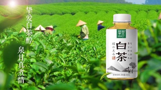 挚泉白茶魅力十足,利润巨大,引来众多经销商争相代理!
