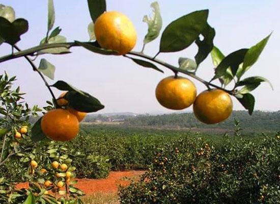 民营企业有力量 果秀食品:创新发展 助推成长