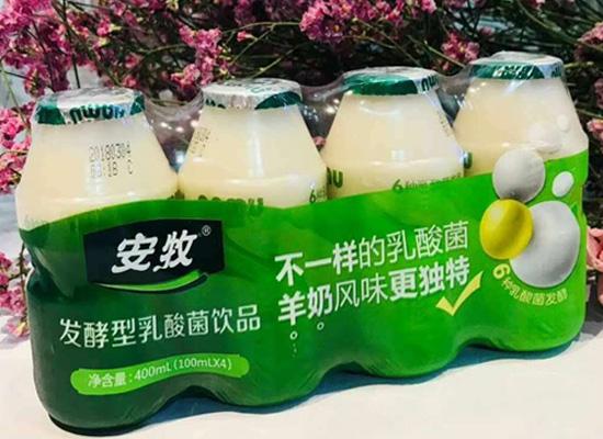 安牧发酵乳酸菌饮品重磅来袭,深受消费者青睐
